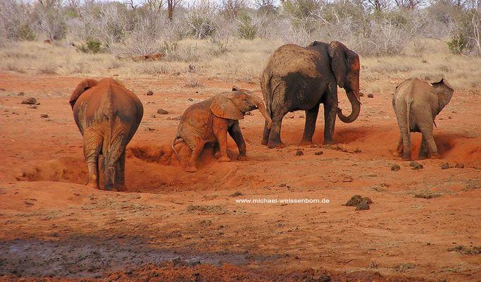 Rote Elefanten Nr. 2