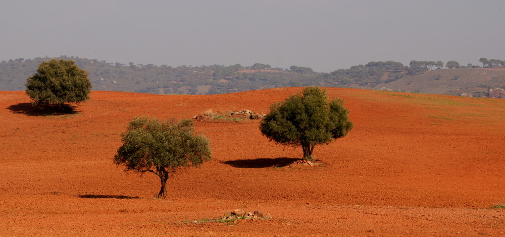 Rote Erde der Sierra Morena