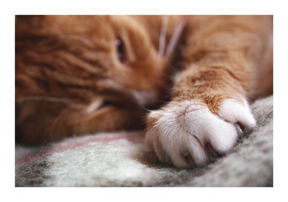 Rote Katze namens Hugo