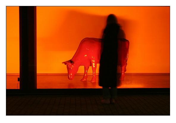 Rote Kuh