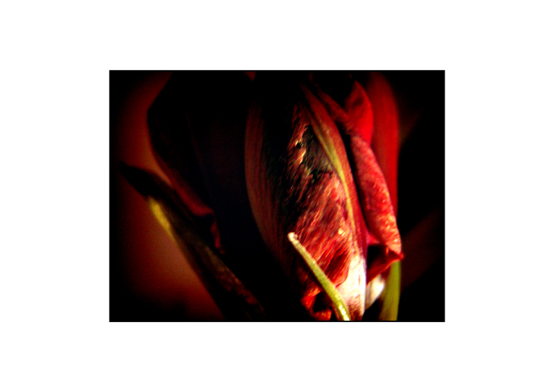 ::: rote liebe #2 :::