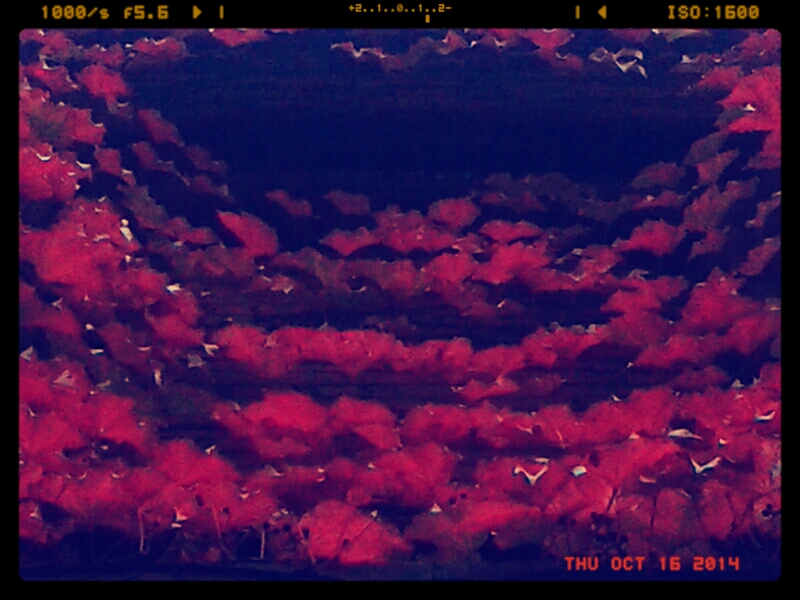 Rote melancholische Schönheit