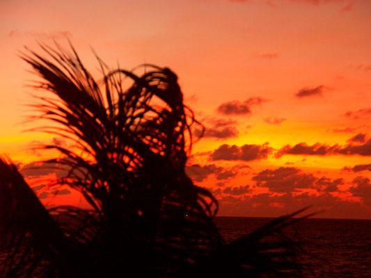 Rote Palmen