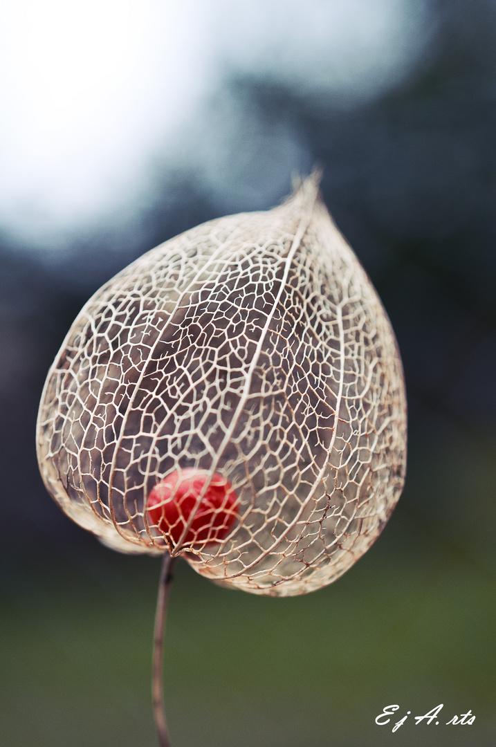 Rote Perle im Netz