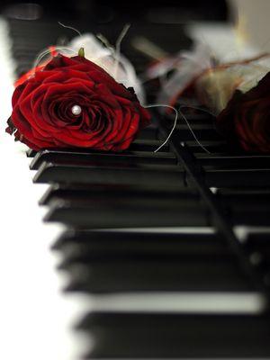 Rote Rose auf einem Klavier