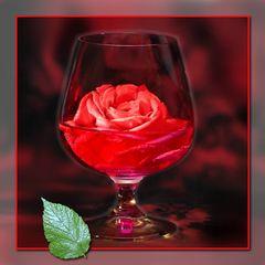 Rote Rose - grüne Minze