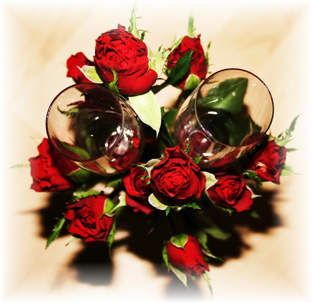 rote rosen foto bild pflanzen pilze flechten. Black Bedroom Furniture Sets. Home Design Ideas