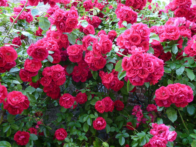 Rote Rosen 2