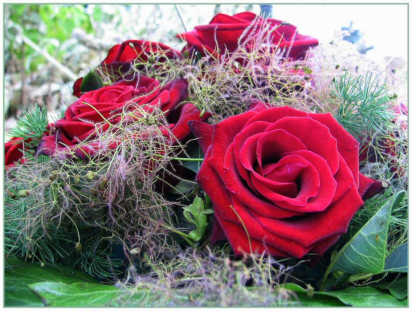 rote rosen zur hochzeit meines patenkindes foto bild gratulation und feiertage. Black Bedroom Furniture Sets. Home Design Ideas