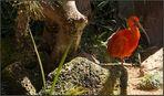 Rote Schönheit aus Teneriffa