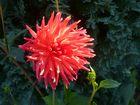 rote Schönheit<3