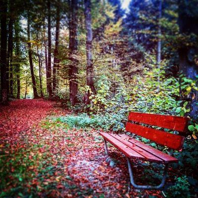 Rote Sitzbank