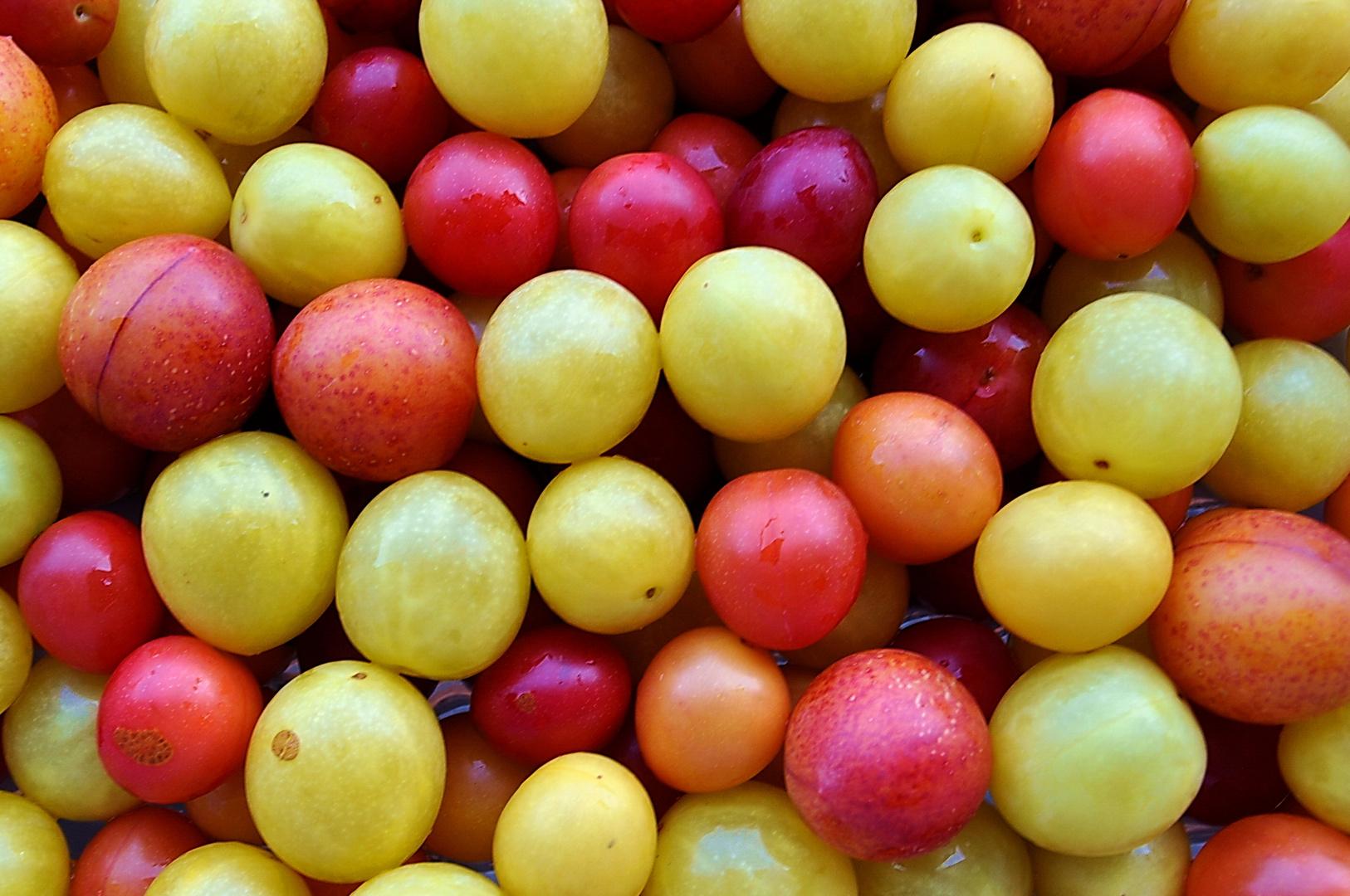 rote und gelbe Mirabellen