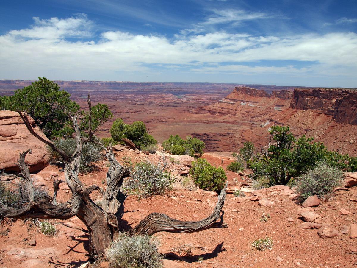 Rote Unendlichkeit im Canyonlands NP