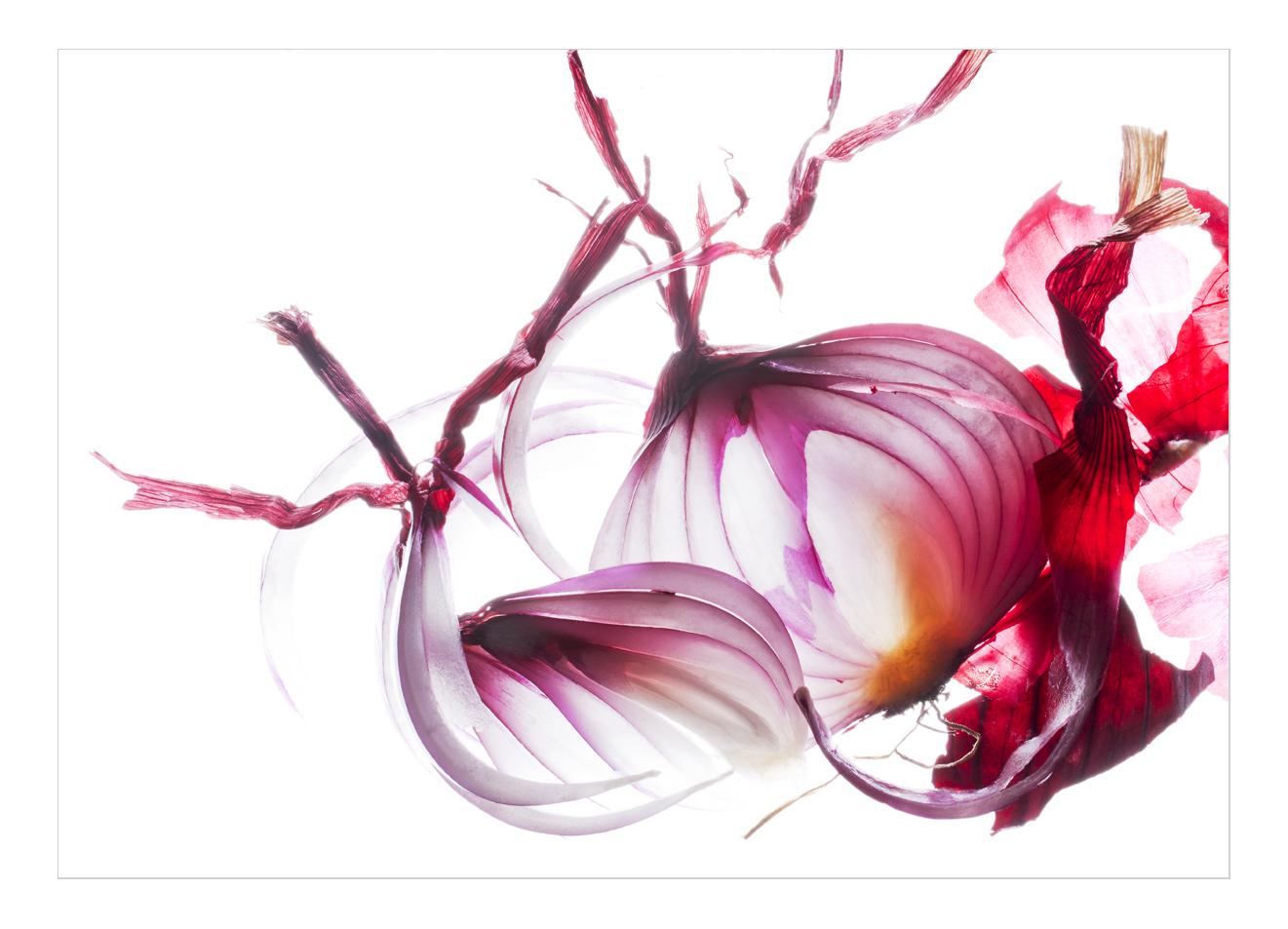 rote Zwiebel mit Schale