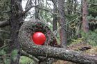 Roter Ballon im Wald