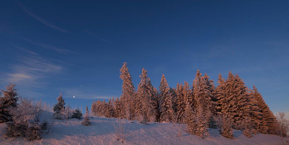 Roter Bergwald