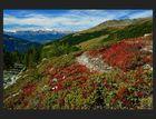Roter Herbstzauber