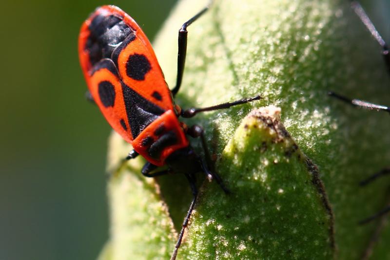 roter k fer foto bild tiere wildlife insekten bilder auf fotocommunity. Black Bedroom Furniture Sets. Home Design Ideas