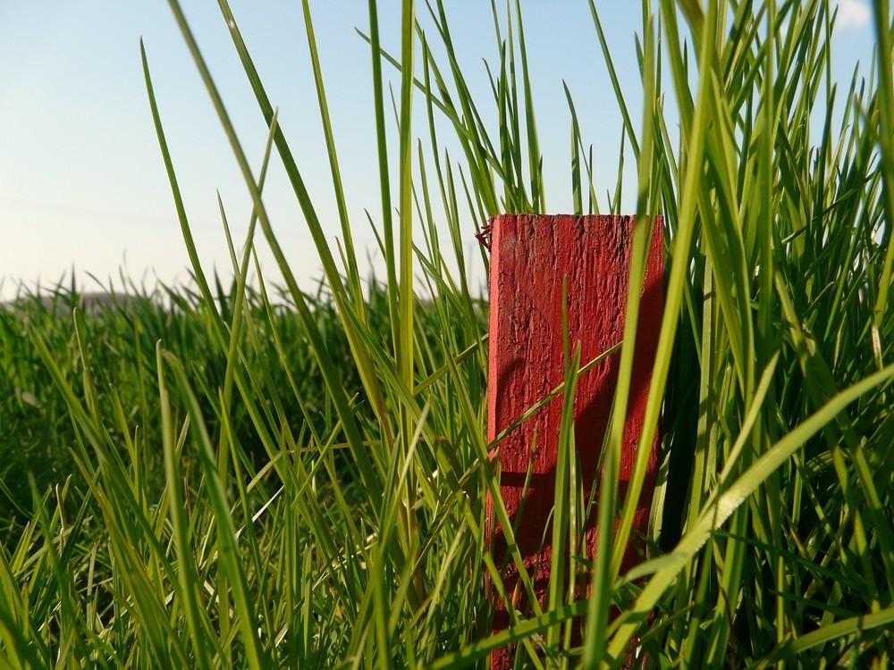 roter pflock in grünem gras