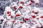 """""""Roter Schnee"""""""