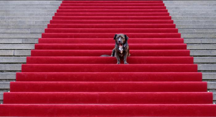 Roter teppich  Roter Teppich für Timmy Foto & Bild | tiere, haustiere, hunde ...