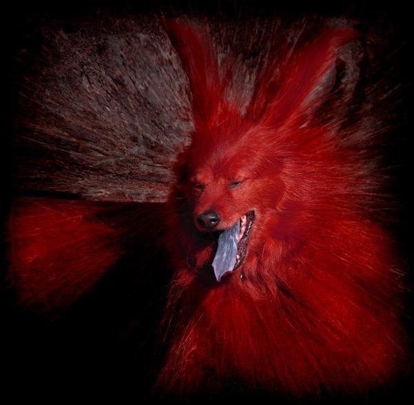 roter Teufel mit blauer Zunge