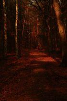 Roter Waldweg.