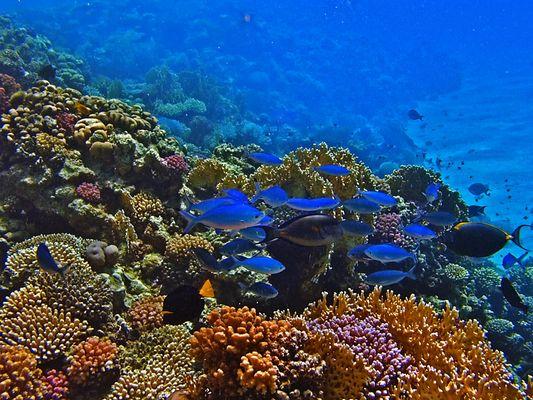 Rotes Meer-2006-Unterwasserlandschaften 1