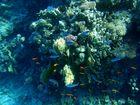 Rotes Meer Fische