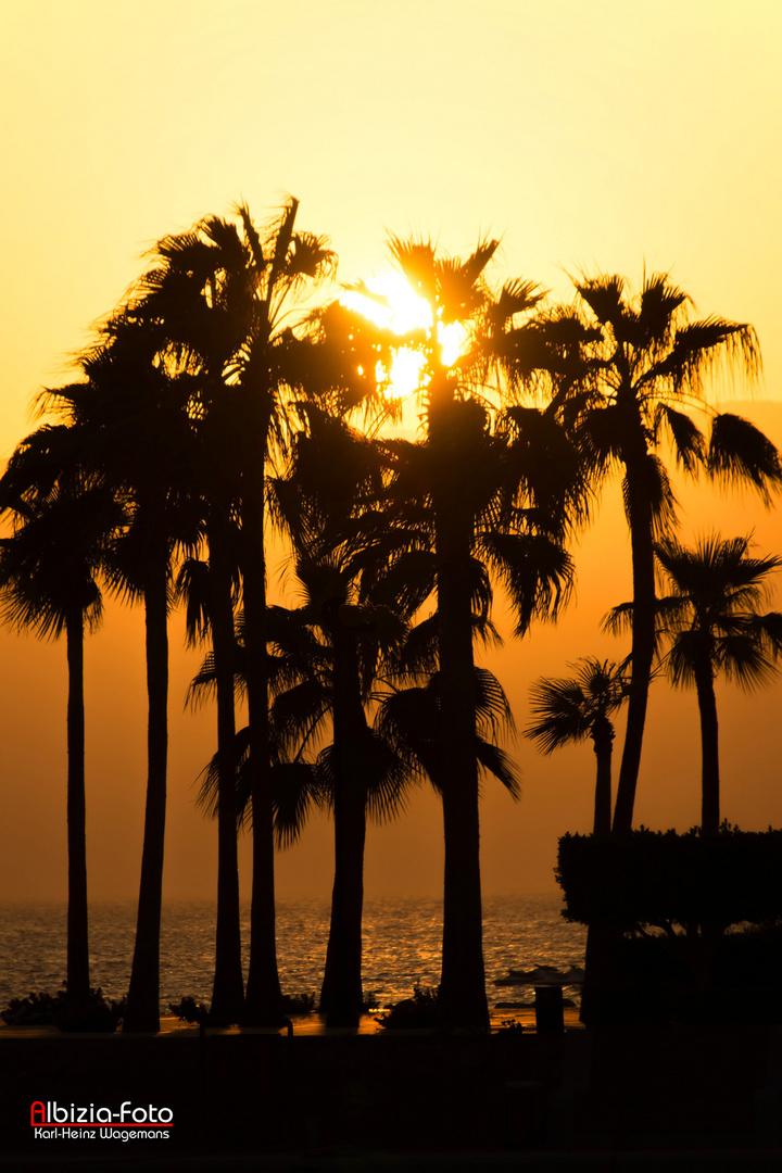 Rotes Meer - Tala Bay - Aqaba (Jordanien)