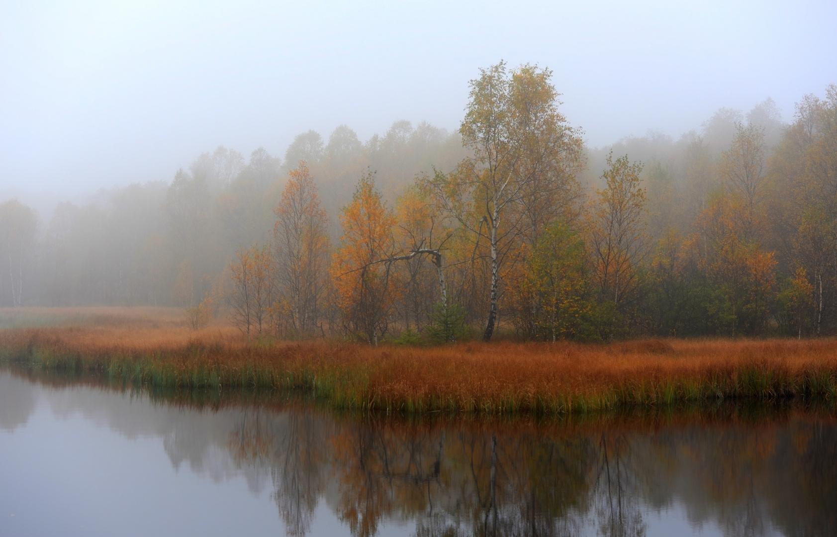 Rotes Moor im Morgennebel
