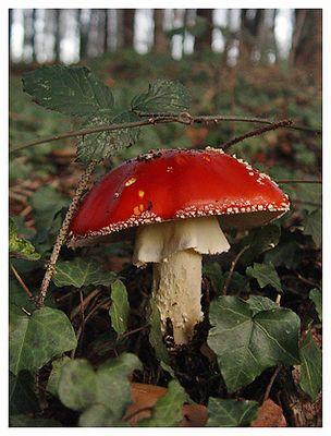 Rotkäppchen allein im tiefen Wald...