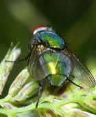 Rotkäppchen - grün und blau