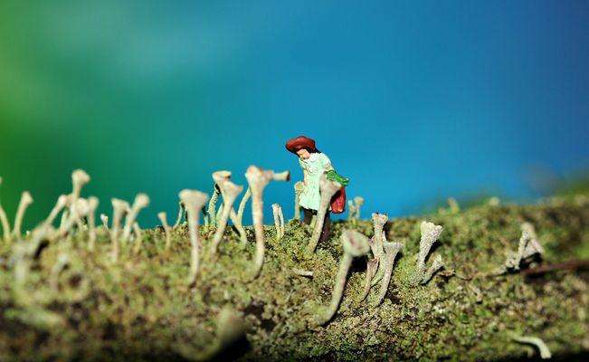 Rotkäppchen im Trompetenflechtenwald