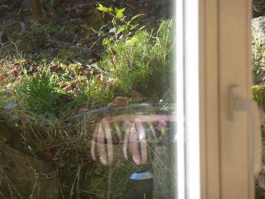 Rotkelchen (Erithacus rubecula)