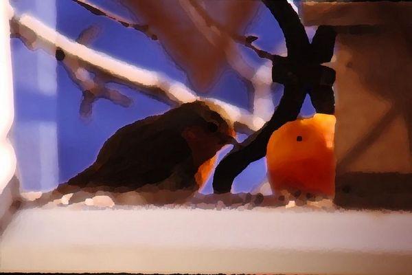 Rotkelchen liebt Apfel