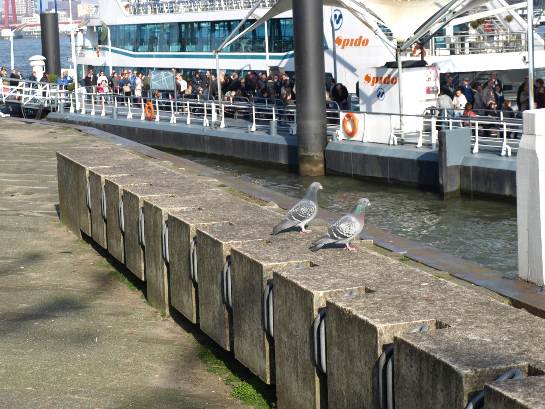 Rotterdam-Hafen-1-