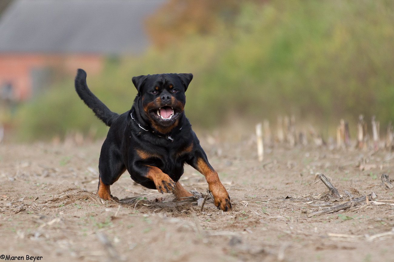 Rottipower