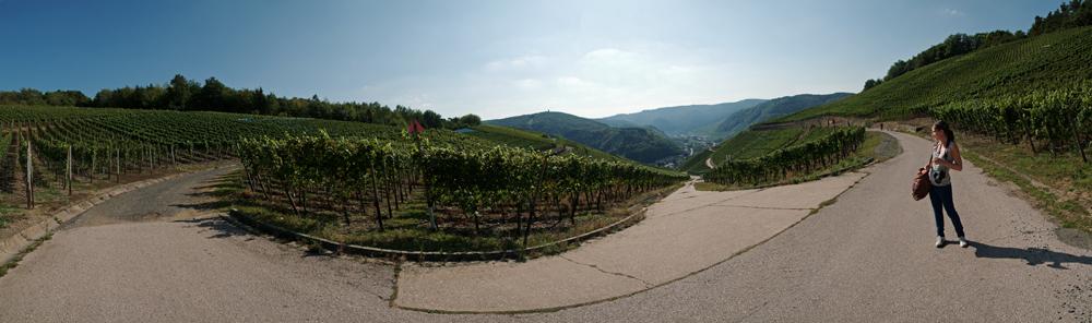 Rotweinwanderweg - Dernau