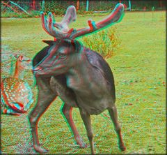 Rotwild im Volkspark 4 (3D)