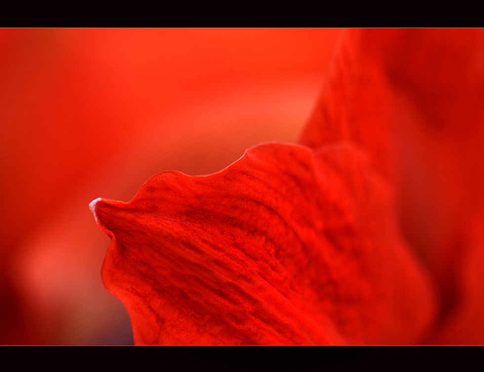 ROUGE..........
