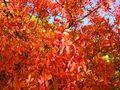 Rouge-automne von JeanPierre