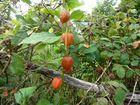 ROUGE coeur rouge fruit rouge