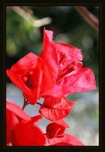 rouge et beau