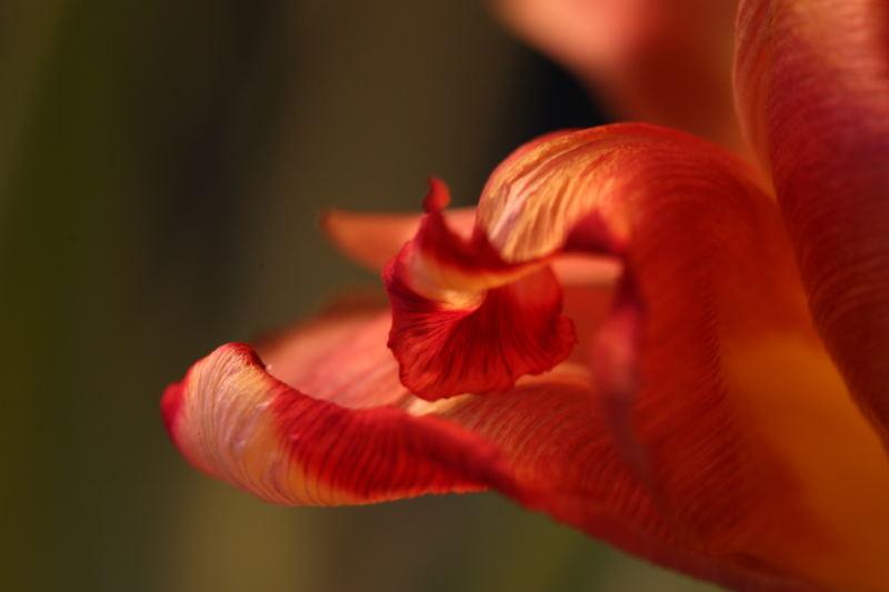 rouge II