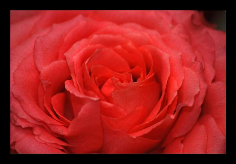 Rouge Passion