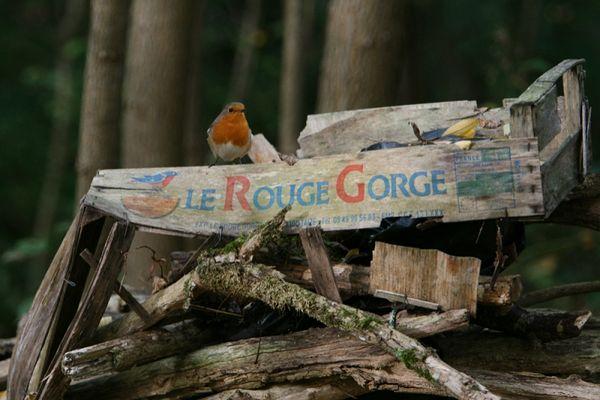 """Rougegorge sur un cageot de Melon """"Le Rouge Gorge"""""""