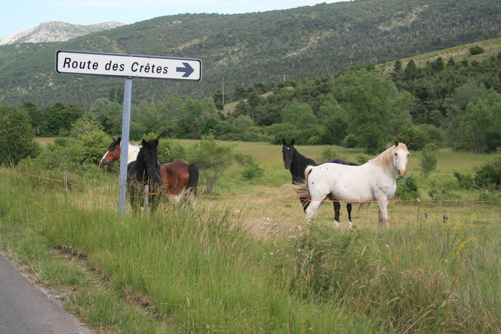 Route de Cretes ( Süd Frankreich )