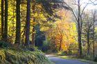 Route de Vescles à Anchay - Jura
